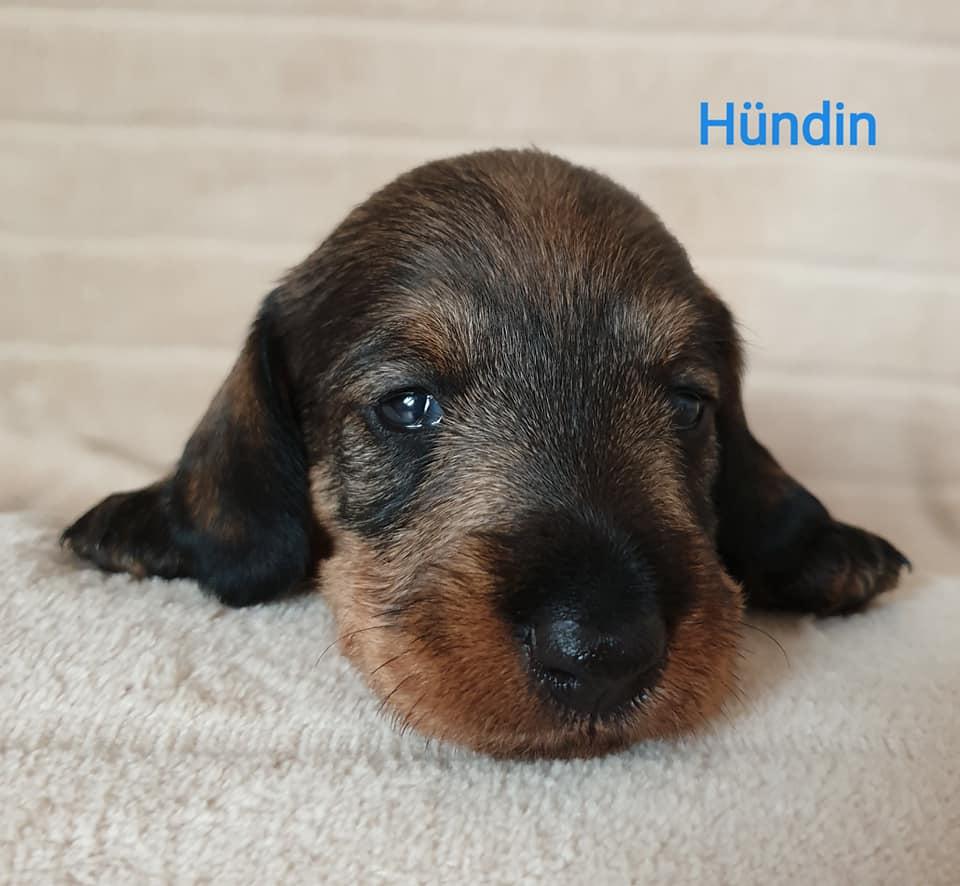 Hündin23wo