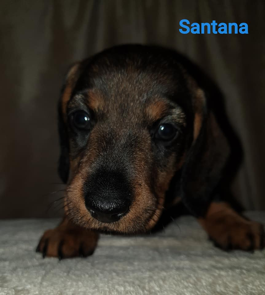 Santana5w