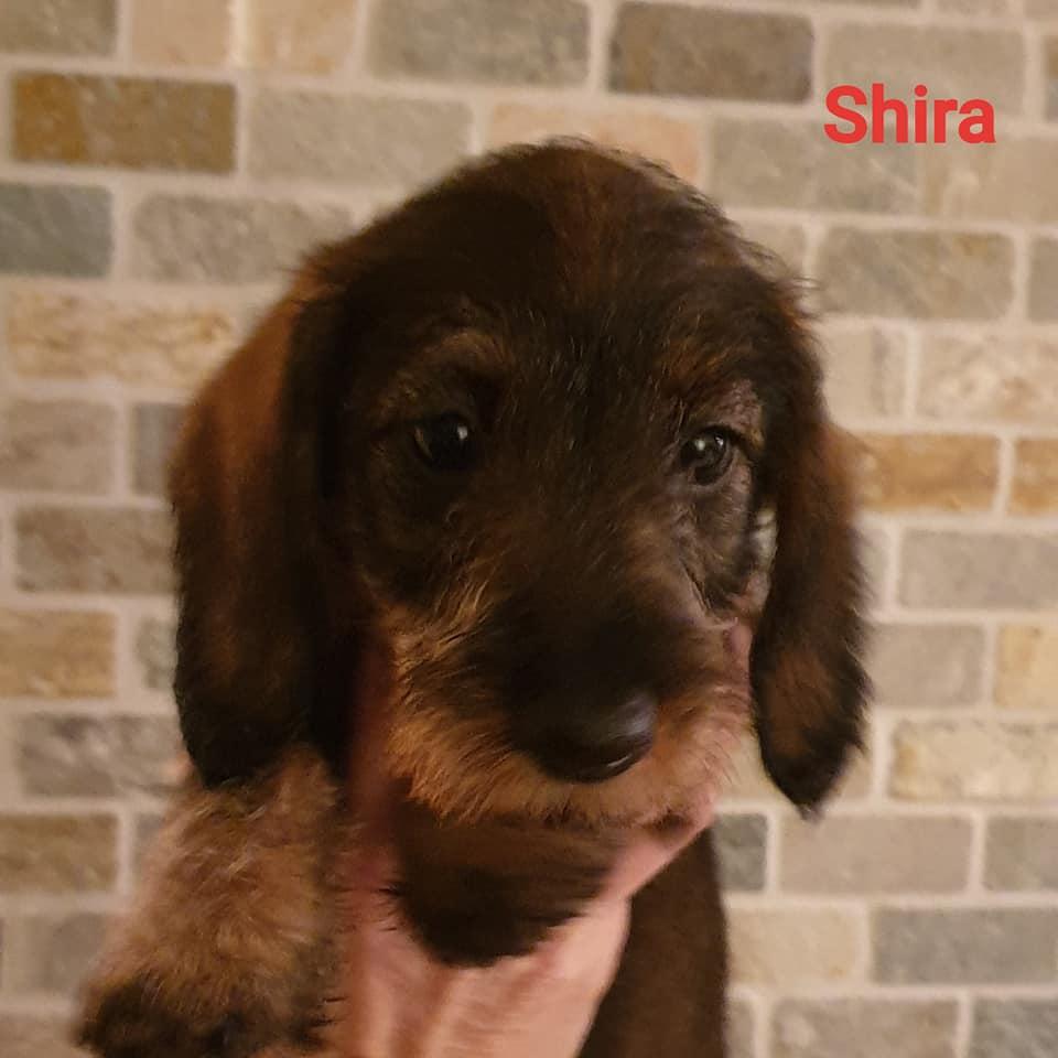 Shira7w