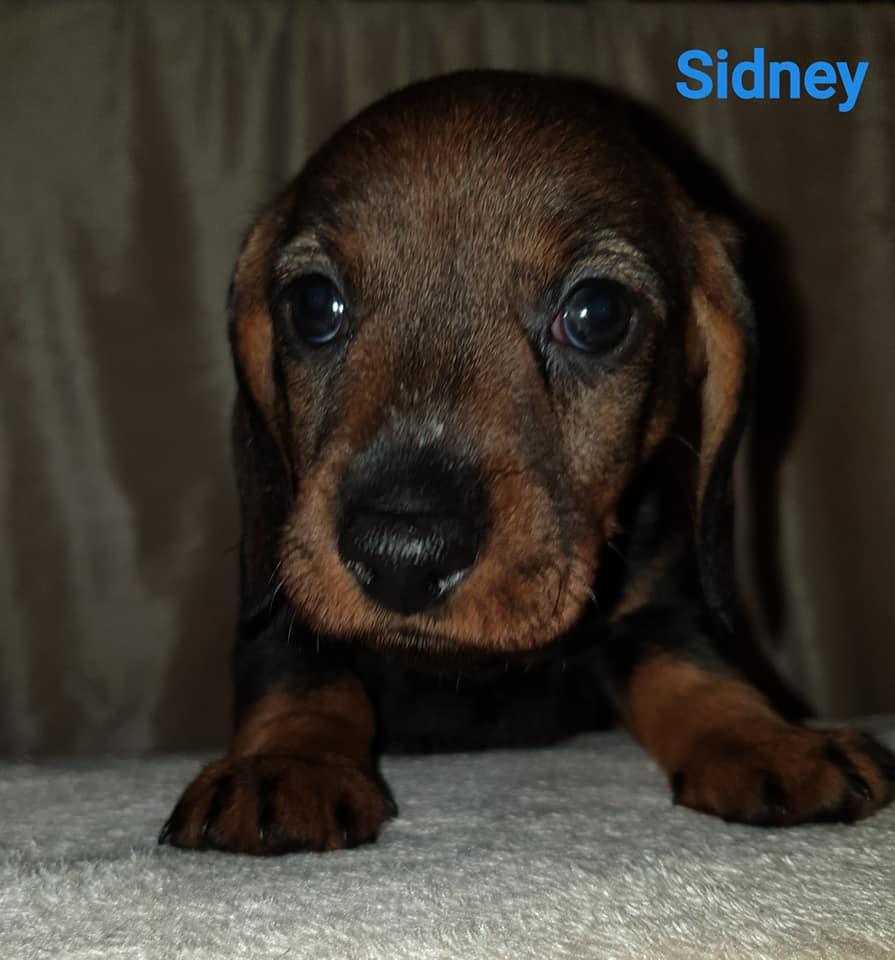 Sidney5w
