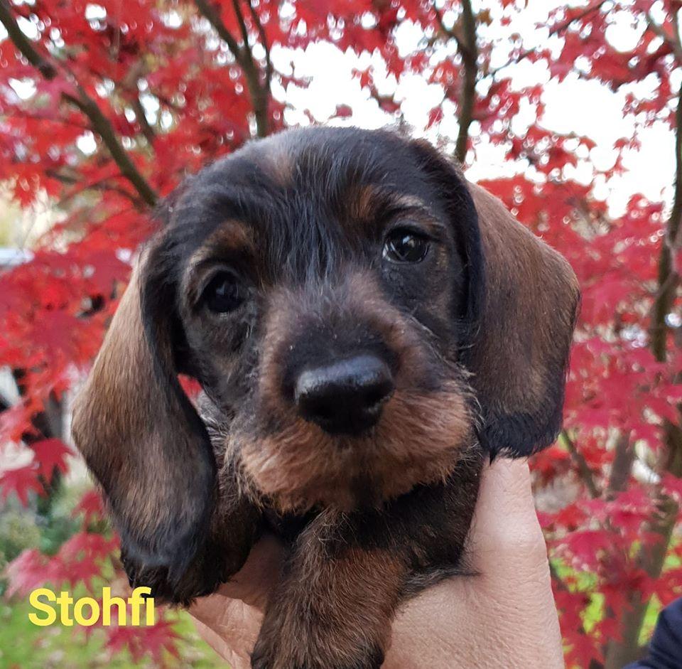 Stohfi 6w