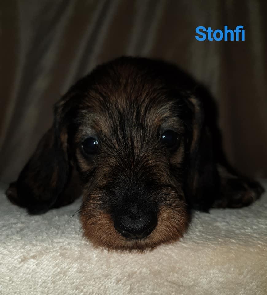 Stohfi5w